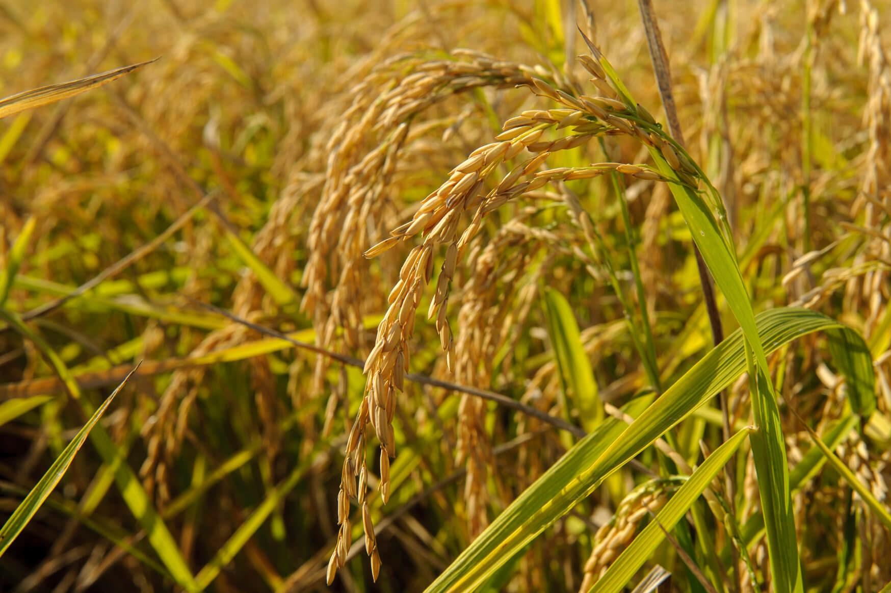 La produzione del seme nella penisola: dal Piemonte alla Sardegna