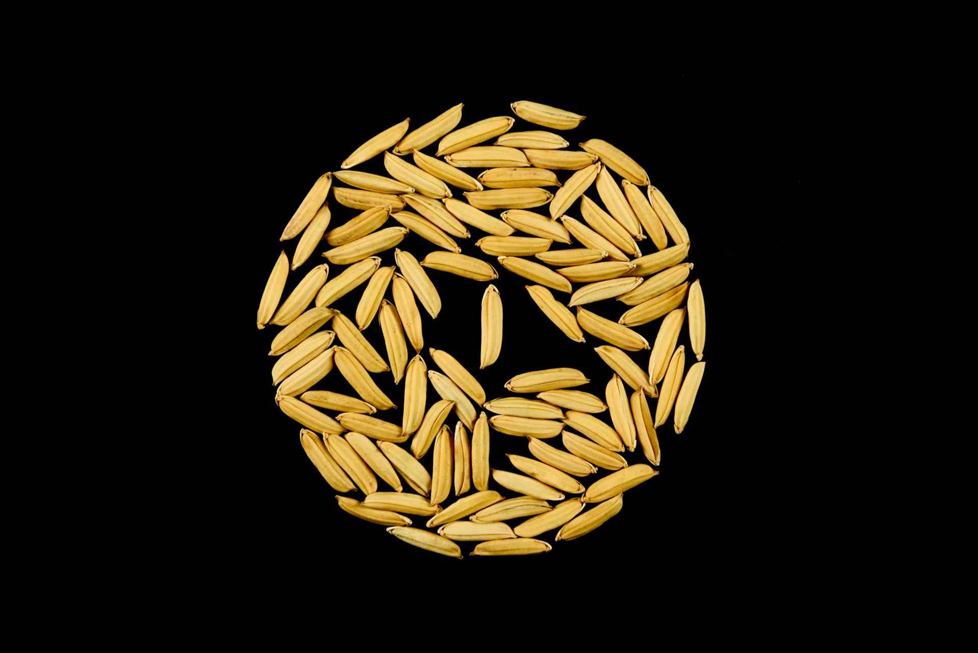 seme di riso apollo risone