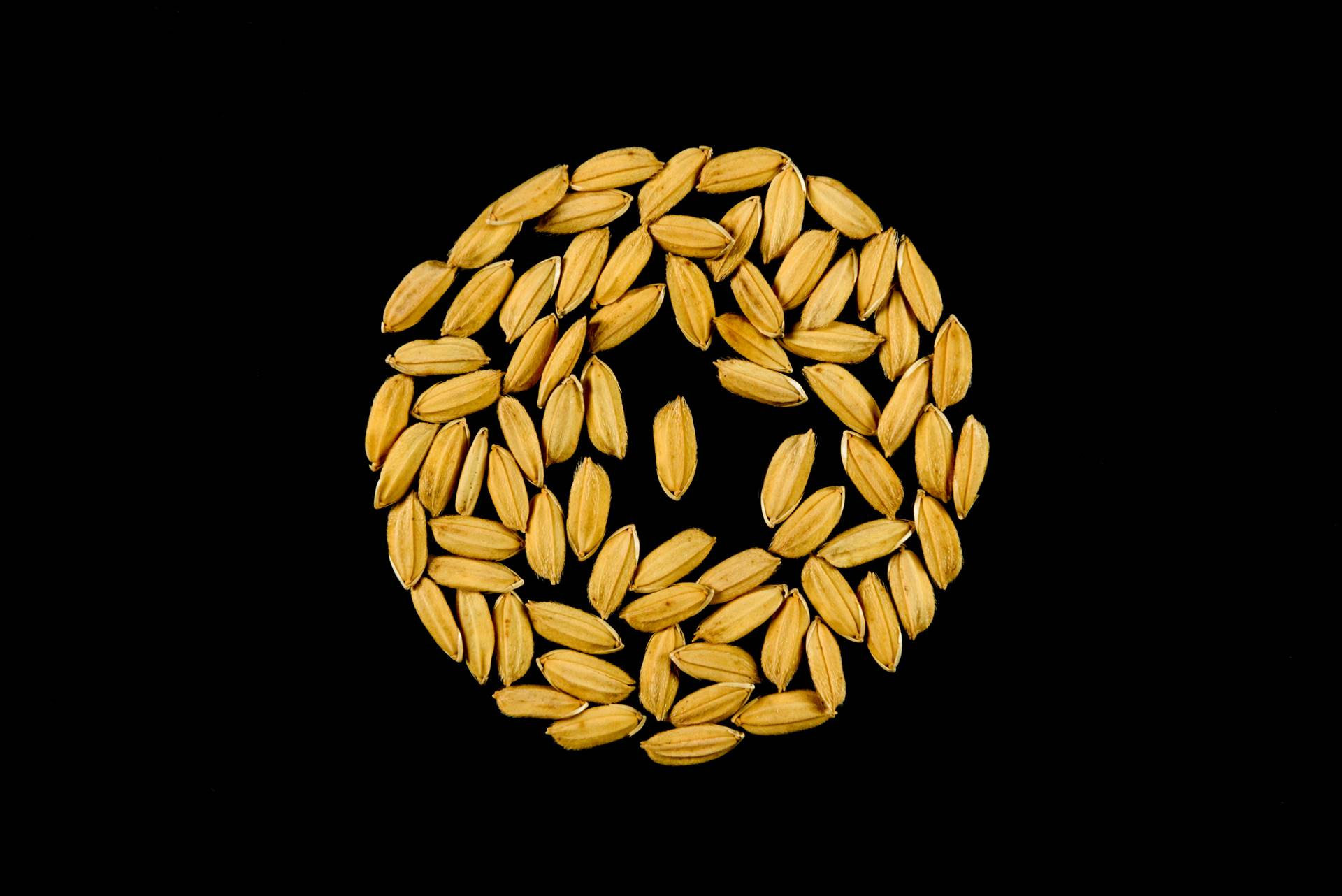 seme di riso barone cl risone